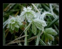 freeze leaves -