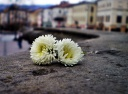 flovers -