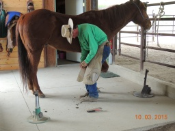 Jim teaches me grated horse, style / Nevada roll /
