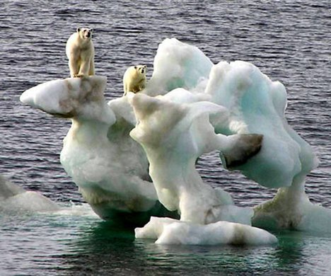 Canadian Polar Bears Stranded Ice Photo.jpg
