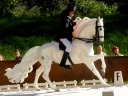 dressage-the tour.jpg