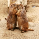 animals-in-love-7.jpg