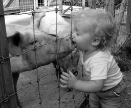 Swine Flu - Kids love animals 04 30 09.jpg