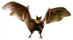 Infected Bat -